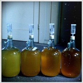 Cider Batch 1: Update